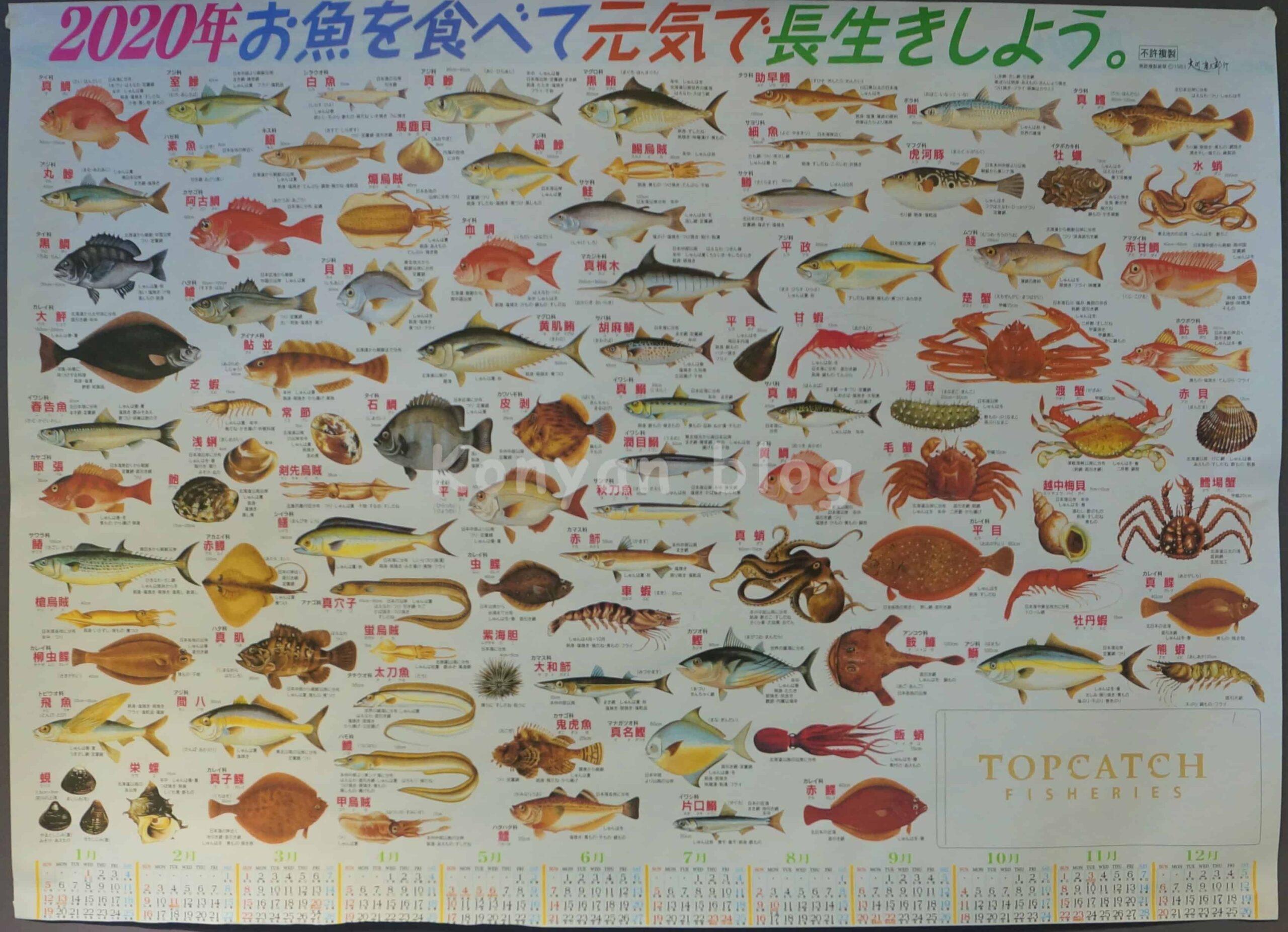 Top Catch Fisheries 一頂魚屋 刺身 ポスター