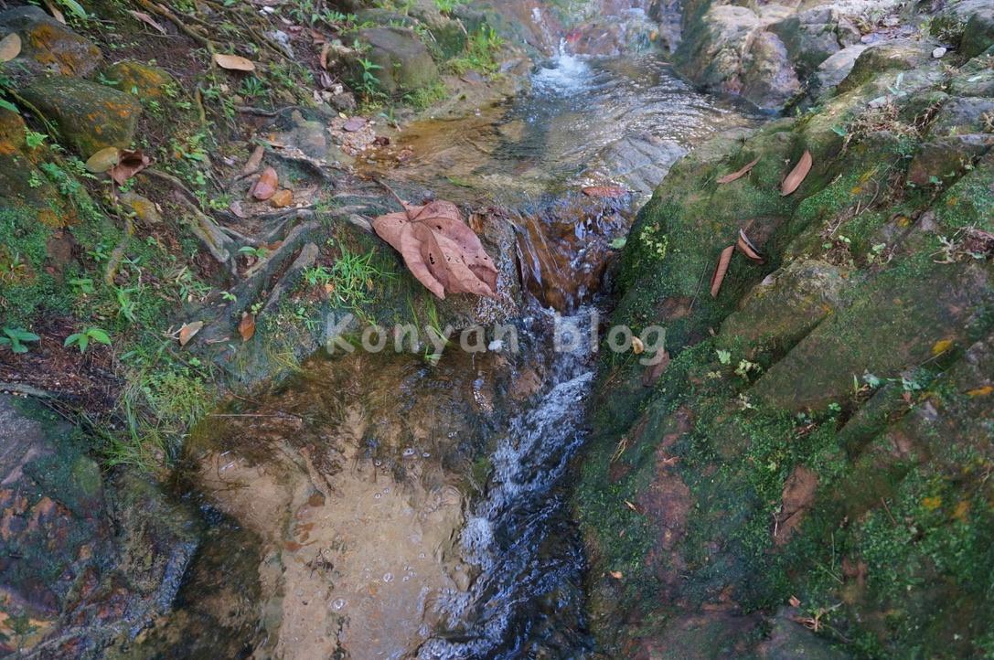 taman rimba bukit kerinchi river 川