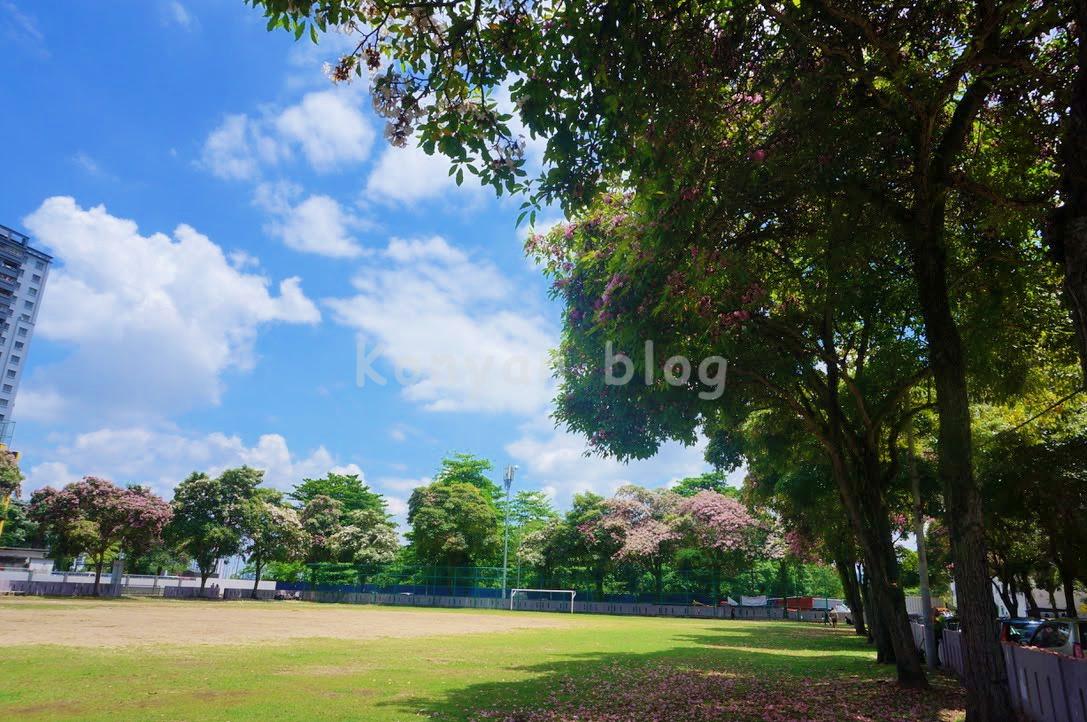 tecoma tree in play ground