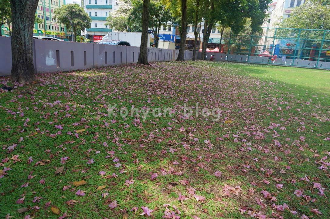 tecoma tree petal fallen on the ground