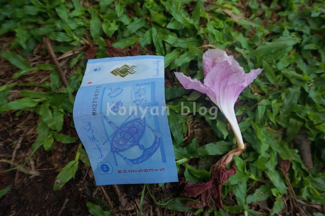 Tecoma tree petal