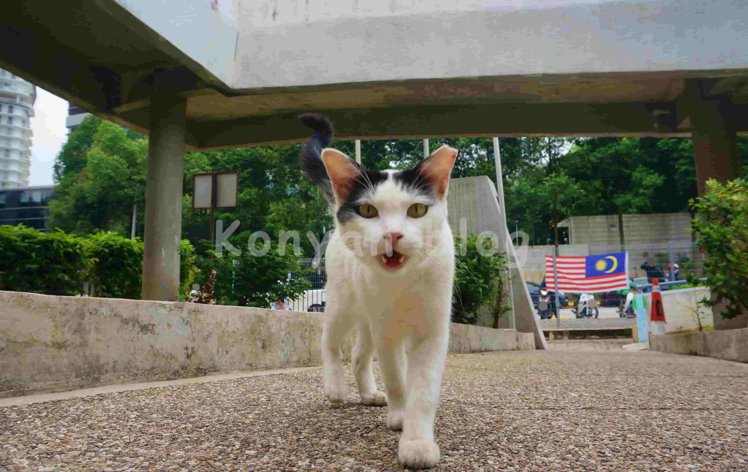 ttdi wet market cat